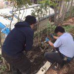 木の療養の様子と枯れ保証制度